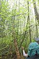 Discovery Park Native Plant Walk (5117780595).jpg