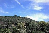 Divinolândia-SP - panoramio.jpg