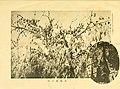 Dobutsugaku zasshi (1912) (20798462689).jpg