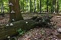Dode bomen zijn onmisbaar in de voedselkringloop. Locatie, Kroondomein Het Loo 01.jpg