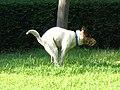Dog defecation 1.jpg