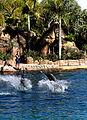 Dolphin Cove 57.jpg