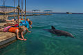 Dolphin Reef in Eilat (7716964114).jpg