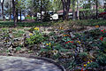 Donald Early home landscaping 1978 019.jpg