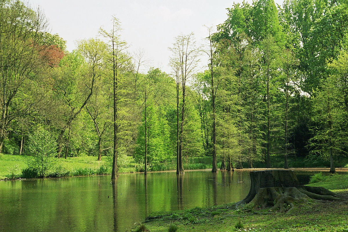 Botanischer Garten Rombergpark Wikipedia