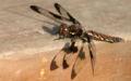 Dragonfly ran-473.jpg