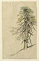 Drawing, Studies. Trees, ca. 1890 (CH 18369001).jpg