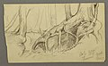 Drawing, Tree rootsgrowing over a boulder (Turner Mountain), 1877 (CH 18191335).jpg