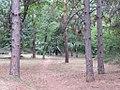 Drvece u parku (10).jpg