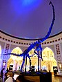 Dubai - Dubai Mall - dinosaur skeleton - دبي مول - الديناصور هيكل عظمي - panoramio.jpg