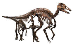 Edmontosaurus Family Clean.png