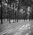 Een bos in de sneeuw bij ochtendzon, Bestanddeelnr 255-8821.jpg