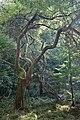 Ein Dschungel vor unserer Tür.jpg