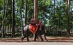 Elefante, Angkor Thom, Camboya, 2013-08-16, DD 01.jpg