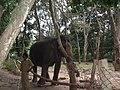 Elephant from Bannerghatta National Park 8693.JPG