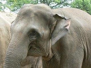 Wildlife of Cambodia