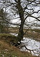 Essex Way, near Copperas Wood, west of Harwich. View to River Stour Estuary. - panoramio.jpg