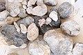 Fósiles - panoramio - panza.rayada.jpg