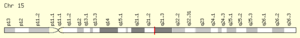 FAM214A - Image: FAM214A Gene Location on Chromosome 15 from Gene Cards