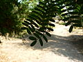 Fale - Giardini Botanici Hanbury in Ventimiglia - 479.jpg