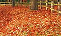 Fall Back (5156227003).jpg