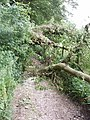 Fallen tree blocking track, Chesham Vale - geograph.org.uk - 189721.jpg