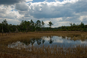 Ocala National Forest - Farles Prairie in Ocala National Forest