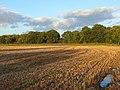Farmland, Padworth - geograph.org.uk - 1015352.jpg