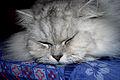 Fat Cat (2321626441).jpg