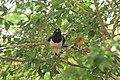 Fauna do Parque Nacional Serra da Capivara (0298).jpg