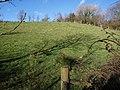 Field near Bridgerule - geograph.org.uk - 715173.jpg