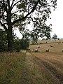 Fieldside footpath - geograph.org.uk - 564650.jpg
