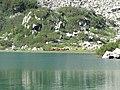 Fish Banderishko lake, Pirin National Park 08.JPG