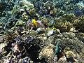 Fish and coral.jpg