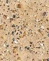 Flintstones - geograph.org.uk - 1138009.jpg