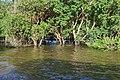 Flooded trees in Kampong Phlouk (6).jpg