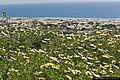 Flores dos Capuchos (4728849266).jpg