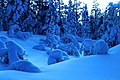 Floresta na Lapônia Finlandesa.jpg