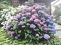 Flower Dortmund 25.jpg