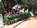 Flower show-2-cubbon park-bangalore-India.jpg