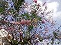 Flowering tree complete.jpg