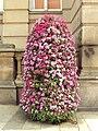 Flowers, Chamberlain Square, Birmingham - DSC08774.JPG