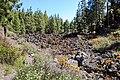 Flowers through lava rocks in Teide National Park on Tenerife, Spain (48225260757).jpg
