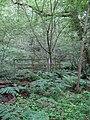 Footbridge, Cypress Wood - geograph.org.uk - 1380485.jpg