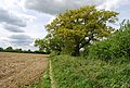 Footpath along the edge of a field heading to Two Mile Ash Lane - geograph.org.uk - 1292603.jpg