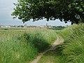 Footpath near Southwold - geograph.org.uk - 192561.jpg