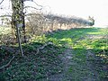 Footpath off Broad Fen Lane - geograph.org.uk - 405268.jpg