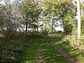 Footpath through Woodland - geograph.org.uk - 270259.jpg