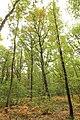 Forêt Départementale de Méridon à Chevreuse le 29 septembre 2017 - 25.jpg