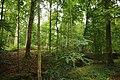Forêt de Mormal 06.jpg